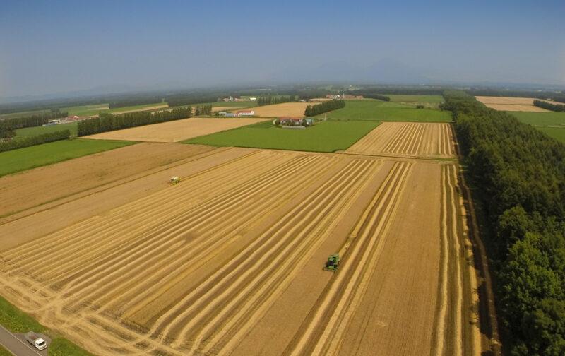 音更(オトフケ)町の小麦畑